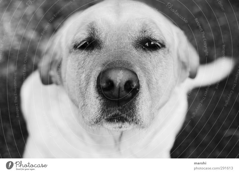 doggie eyes Animal Pet Dog Animal face 1 Black White Puppydog eyes Crossbreed Snout Looking Beautiful Black & white photo Exterior shot Close-up Day