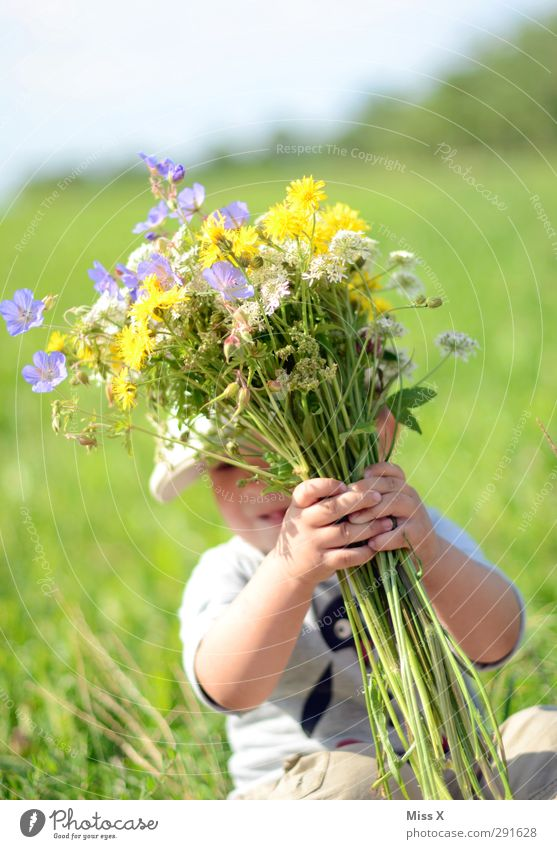 Photocase needs more summer Human being Baby Toddler Infancy 1 1 - 3 years Spring Summer Flower Grass Leaf Blossom Garden Meadow Blossoming Smiling Laughter
