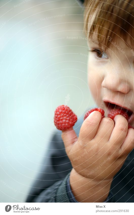 Human being Child Red Eating Fruit Food Fresh Fingers Nutrition Sweet Cute Toddler Delicious Organic produce Berries Juicy