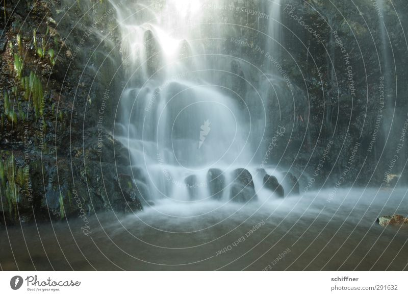 curtain of water Environment Nature Landscape Plant Water Sunlight Bushes Fern Forest Rock Brook River Waterfall Beautiful Mountain stream Flow To fall