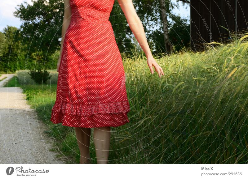 summer day Human being Young woman Youth (Young adults) 1 18 - 30 years Adults Field Dress Beautiful Red Wheat Wheatfield Colour photo Exterior shot Evening