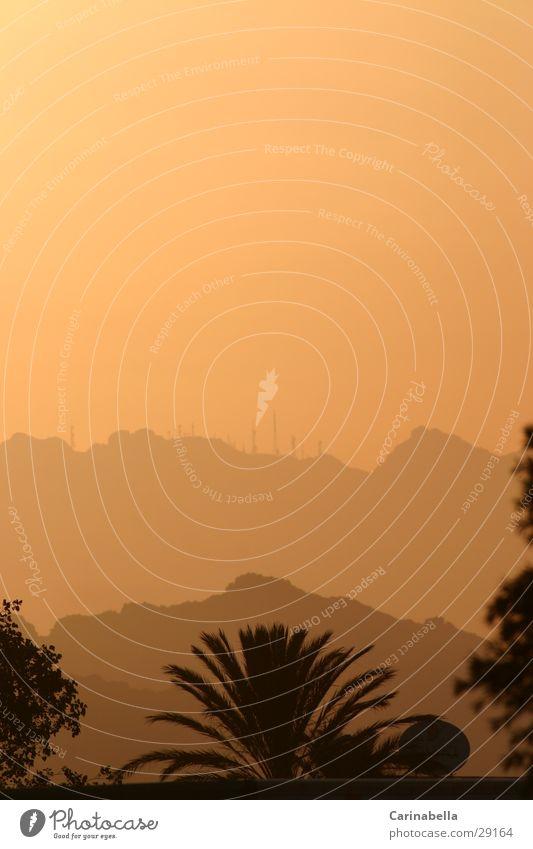 evening mood Sardinia Palm tree Sunset Hill Olbia Evening Mountain Fog Orange