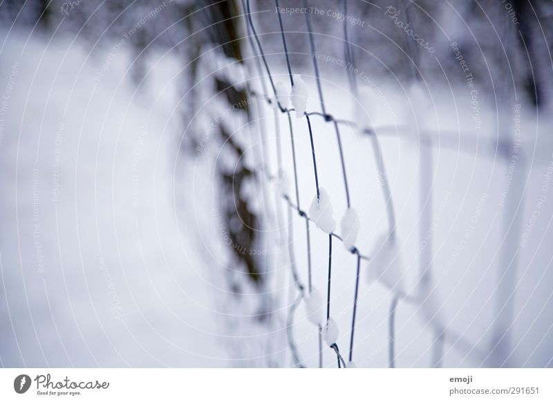 snow Environment Nature Winter Bad weather Snow Garden Cold Blue White Wire Wire fence Colour photo Subdued colour Exterior shot Close-up Deserted