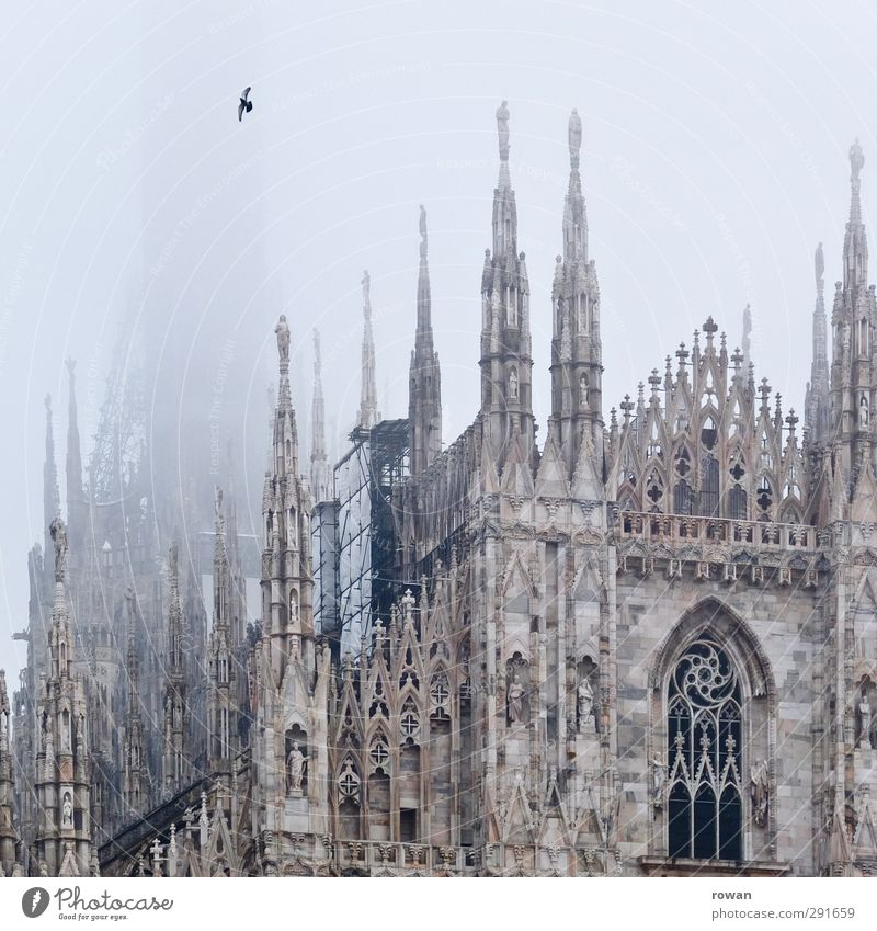 Dark Cold Architecture Religion and faith Building Bird Exceptional Flying Facade Fog Tall Church Gloomy Roof Point Culture