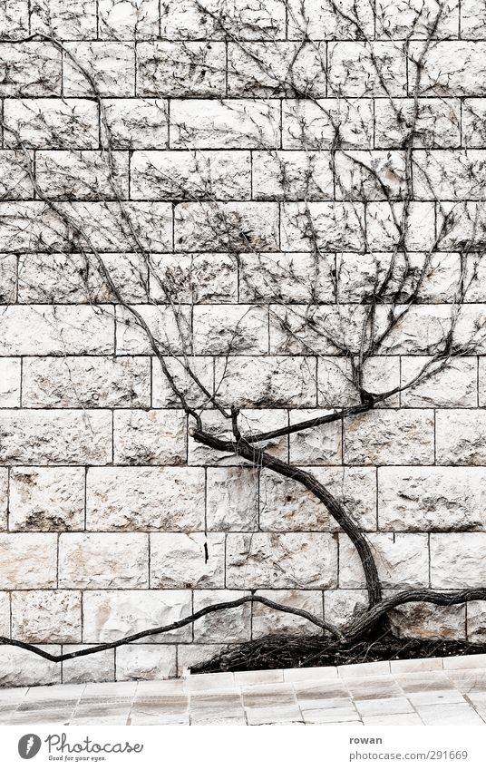 wall vegetation Tree Bushes Wall (barrier) Wall (building) Facade Gloomy Dry Town Stone wall Creeper Shriveled Decoration Wood Branched Winter
