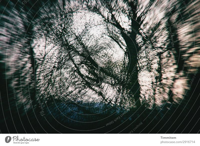 Mysterious tree world Environment Nature Plant Sky Autumn Winter Weather Tree Park Forest Blue Green Black White Emotions Irritation Double exposure Dream