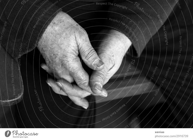 Senior hands folded in black and white next to chair back Chair Human being Masculine Man Adults Male senior Senior citizen Hand Fingers Legs 1 45 - 60 years