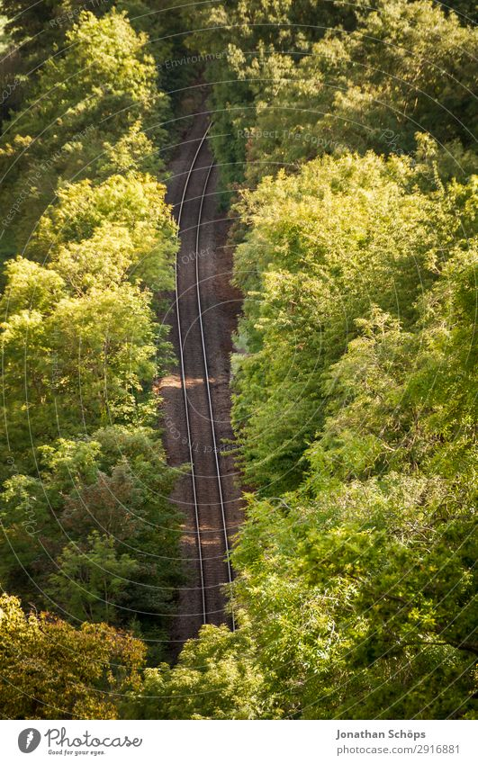 Railway tracks in the forest Environment Nature Landscape Transport Means of transport Traffic infrastructure Public transit Logistics Train travel