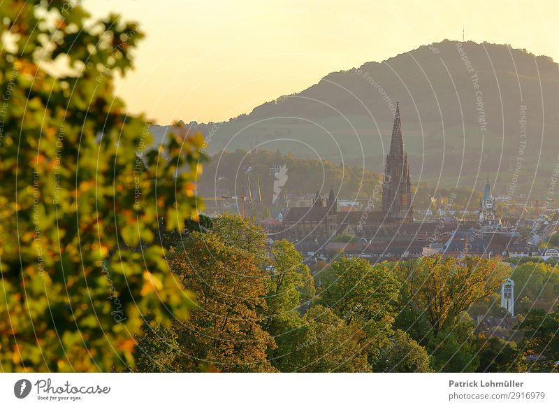 Freiburg in golden October Tourism Sightseeing City trip Environment Nature Landscape Cloudless sky Autumn Beautiful weather Tree Mountain Freiburg im Breisgau