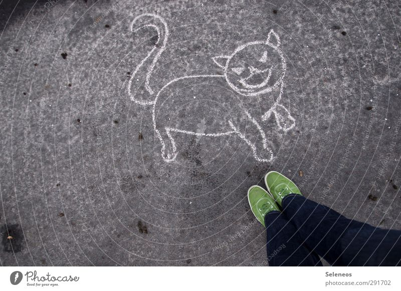 Solution? Human being Legs Feet 1 Street painting Jeans Footwear Animal Pet Cat Stone Concrete Stand Love of animals Chalk Drawing Asphalt Colour photo