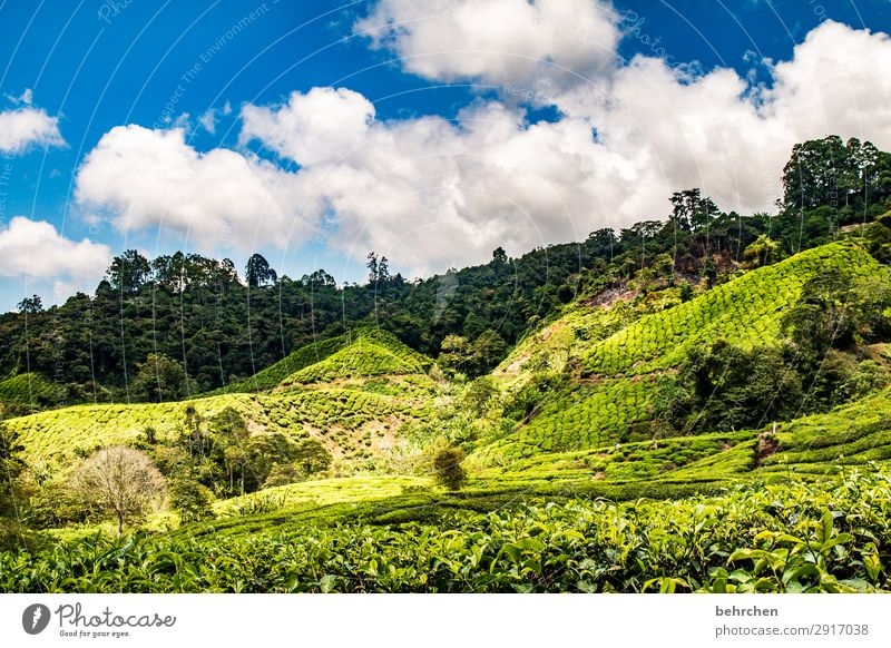 good-night tea Vacation & Travel Tourism Trip Adventure Far-off places Freedom Environment Nature Landscape Sky Clouds Plant Leaf Agricultural crop Tea plants