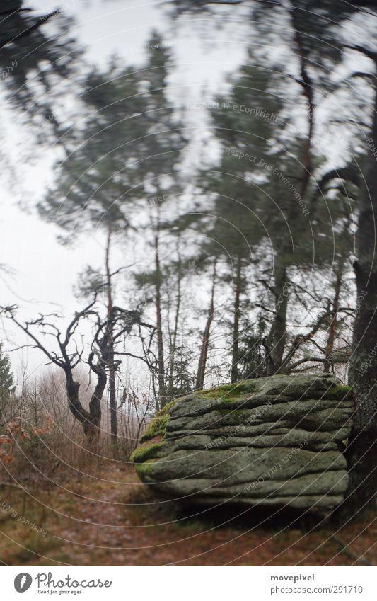 mystic rock Autumn Tree Moss Forest Rock Stone Threat Dark Creepy Mysterious Iconic sacrificial rocks Mythology Exterior shot Deserted Copy Space top Twilight