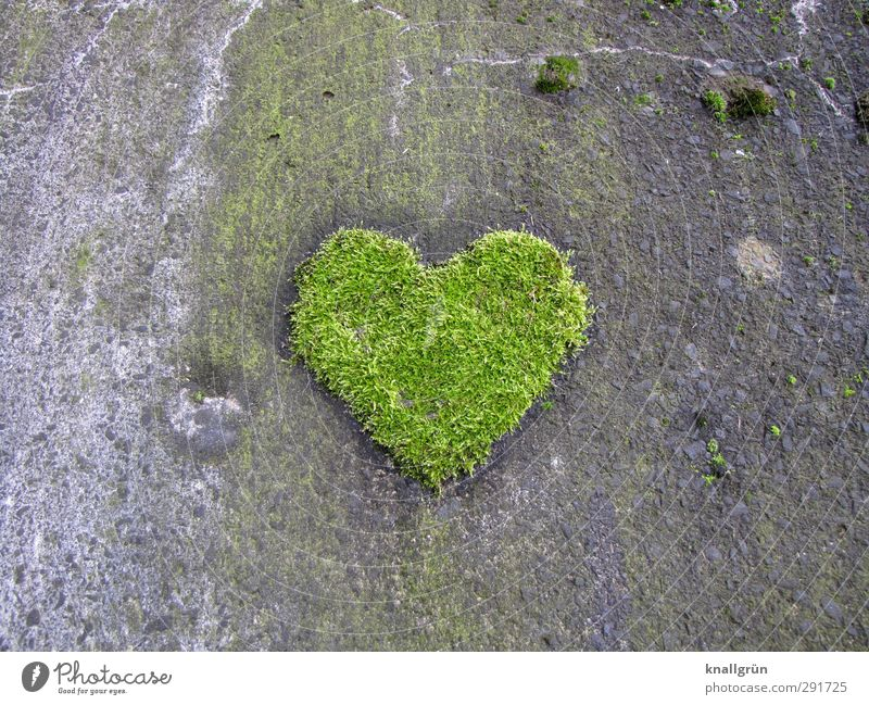 Of course. Environment Plant Moss Foliage plant Wall (barrier) Wall (building) Facade Sign Heart Growth Exceptional Natural Gray Green Emotions Joy Love Romance