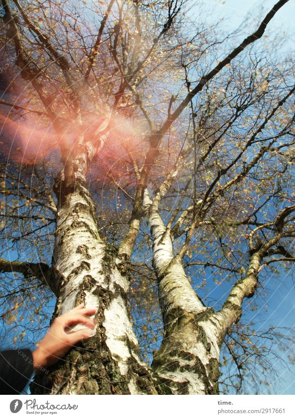 Test pattern | hot air Hand Environment Nature Sky Autumn Beautiful weather Tree Birch tree Tree trunk Forest Wood Line To hold on Dream Exceptional Natural