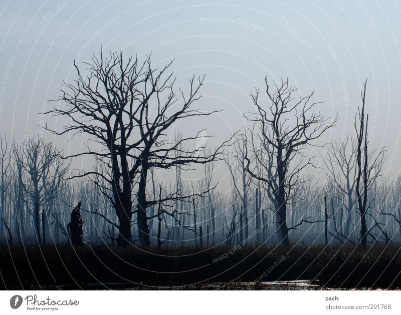 Nature Blue Plant Tree Loneliness Winter Black Forest Environment Dark Autumn Death Sadness Wood Rain Fear