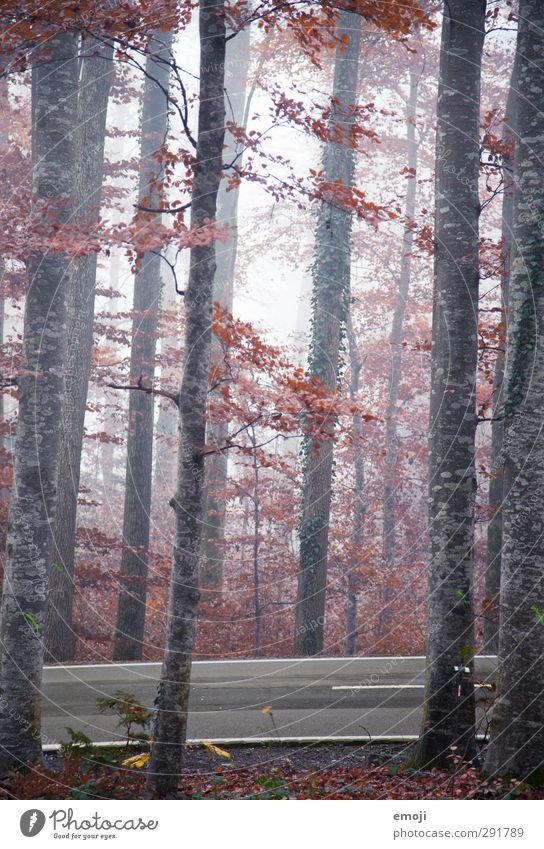 autumnal Environment Nature Autumn Climate Bad weather Fog Tree Forest Cold Natural Colour photo Exterior shot Deserted Day Shallow depth of field