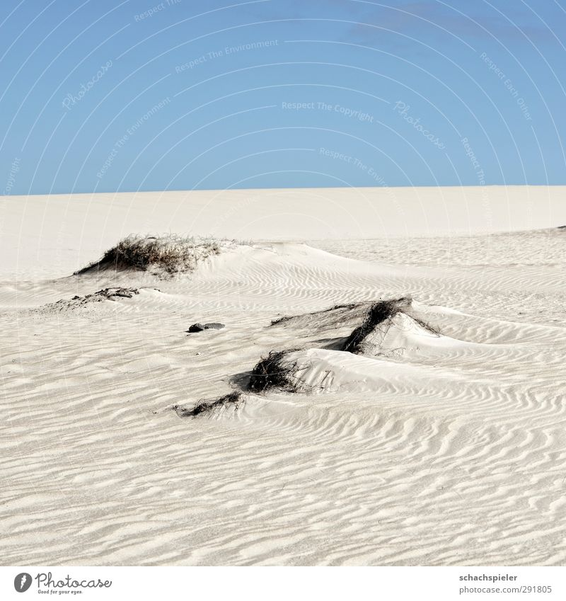 Nothing as sand Environment Nature Landscape Elements Earth Sand Sky Beautiful weather Drought Island Fuerteventura Desert Dune Blue Adventure Fear Loneliness