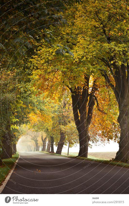 Nature Plant Tree Landscape Environment Street Lanes & trails Weather Climate Fog Authentic Transport Target Asphalt Traffic infrastructure Autumnal