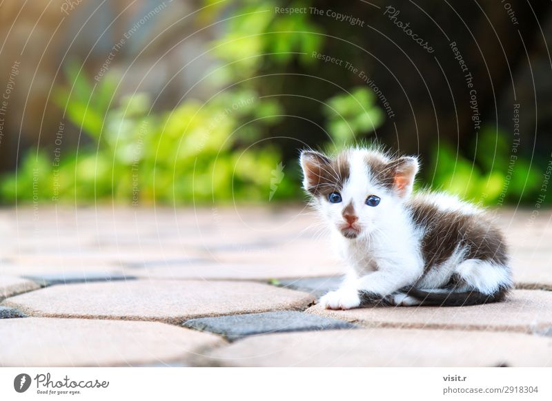 Stray kitten sitting and looking at camera House (Residential Structure) Garden Nature Animal Pet Cat Paw 1 Love Sit Poverty Dirty Small Funny Cute Brown Green