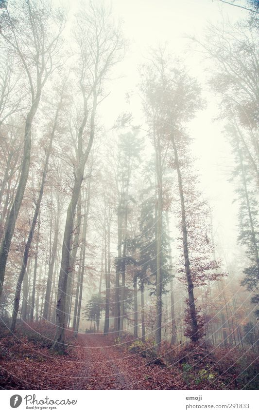tall Environment Nature Landscape Autumn Bad weather Fog Tree Forest Threat Cold Natural Colour photo Exterior shot Deserted Day Shallow depth of field