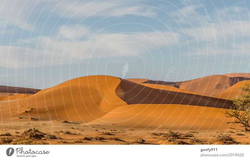 Namibia's Desert Vacation & Travel Tourism Trip Adventure Far-off places Freedom Safari Expedition Environment Nature Landscape Plant Animal Elements Earth Sand
