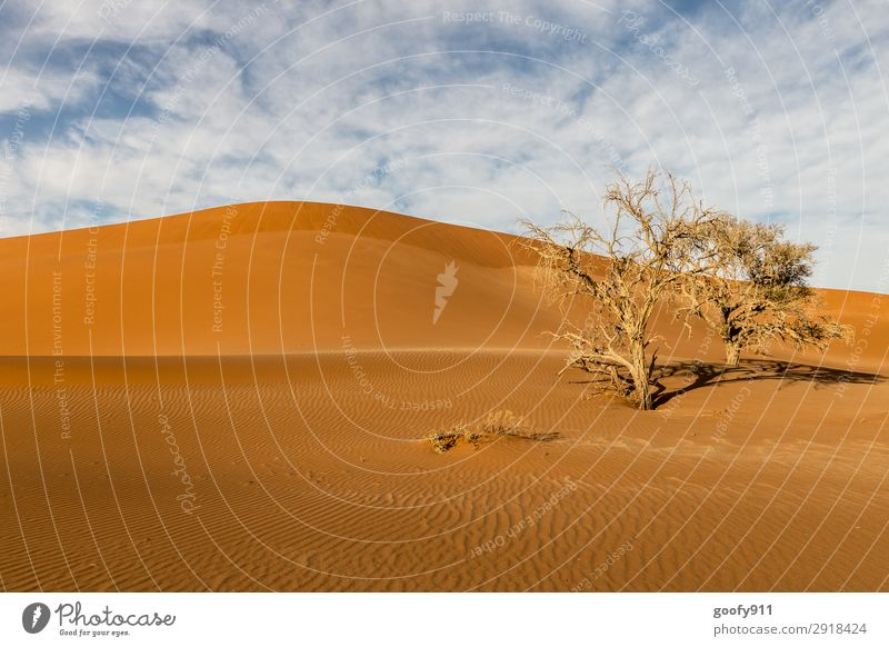 Barren Namib Desert Vacation & Travel Tourism Trip Adventure Far-off places Freedom Safari Expedition Environment Nature Landscape Plant Animal Elements Earth