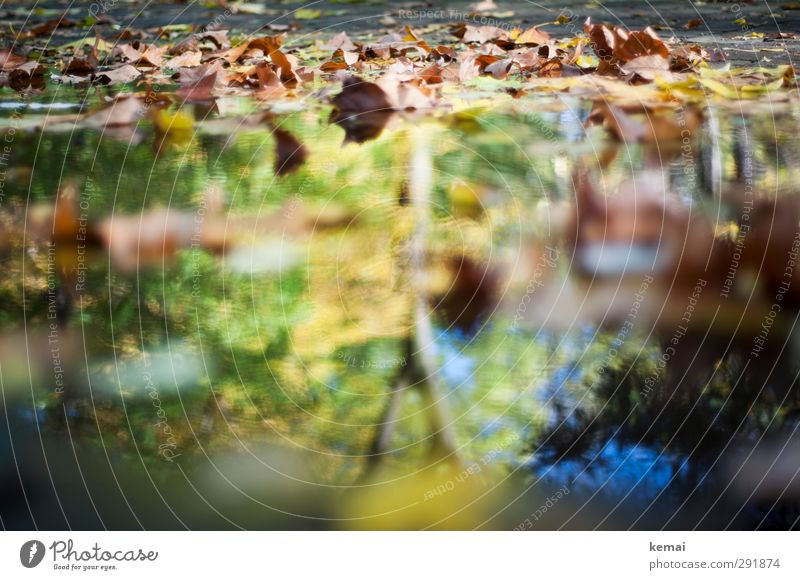 Review of the autumn Environment Nature Plant Water Sunlight Autumn Beautiful weather Tree Leaf Garden Park Puddle Wet Yellow Green Autumnal Autumn leaves