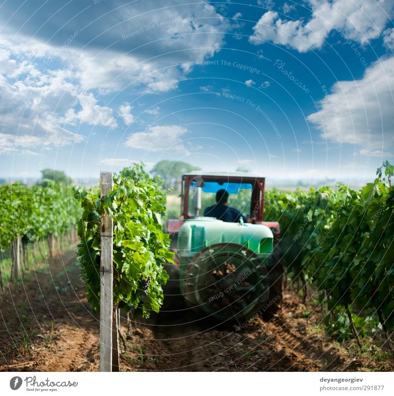 Tractor spraying vineyards with chemicals. Wine Medical treatment Work and employment Machinery Nature Landscape Sky Grass Growth Green Rural agriculture