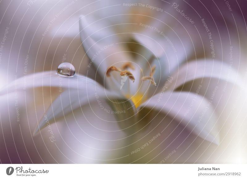 Gentle Romantic Artistic Image.Soft Pastel Background Blur. Lifestyle Elegant Style Design Work of art Environment Nature Plant Flower Foliage plant Water Drop