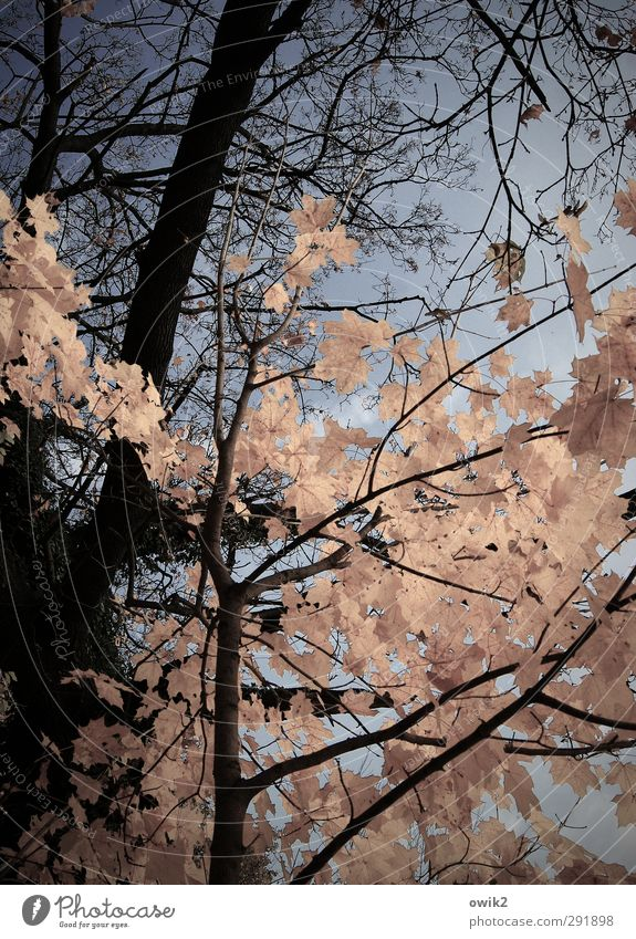 Nature Blue Plant Tree Leaf Black Environment Autumn Wood Natural Pink Weather Climate Wait Idyll Change