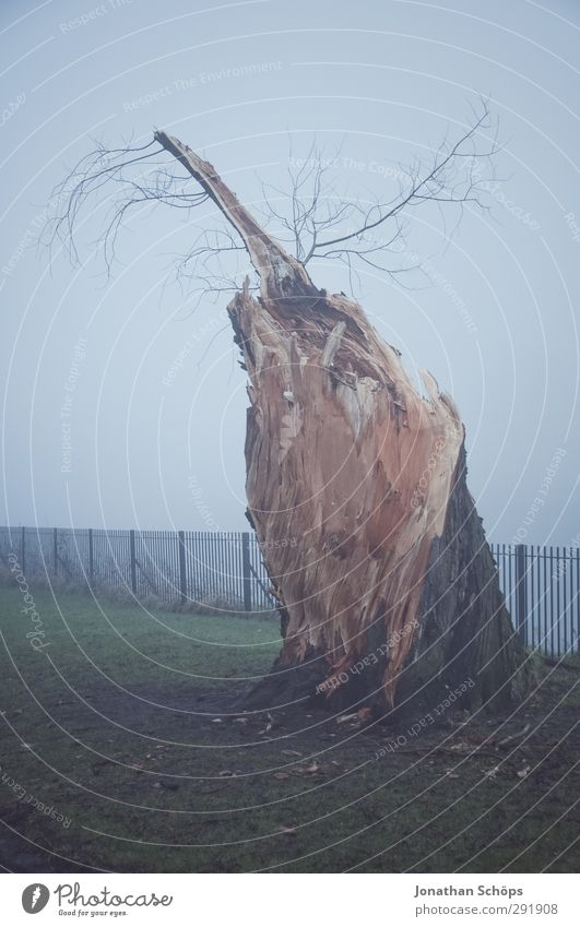 Nature Tree Loneliness Winter Calm Environment Dark Meadow Cold Autumn Death Sadness Park Fog Growth Gloomy