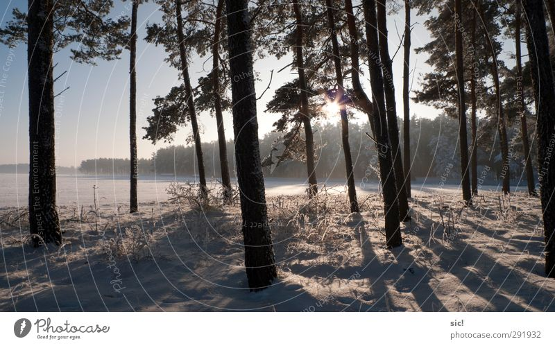 edge of the forest Hunting Vacation & Travel Tourism Trip Winter Snow Winter vacation Hiking Environment Nature Landscape Sun Beautiful weather Ice Frost Tree