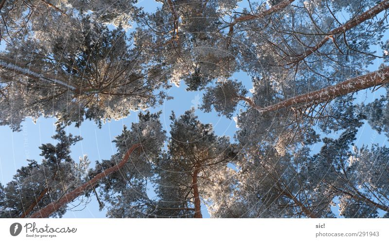 Sky Nature Blue Vacation & Travel White Tree Winter Forest Environment Cold Snow Freedom Brown Ice Power Climate