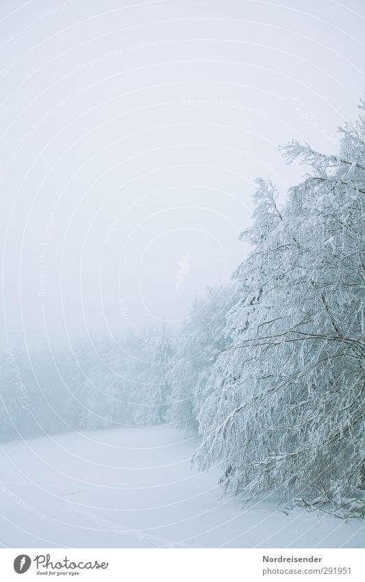 rigor Winter Snow Winter vacation Nature Landscape Climate Weather Bad weather Fog Ice Frost Tree Meadow Forest Cold White Calm Pure Stagnating Thueringer Wald