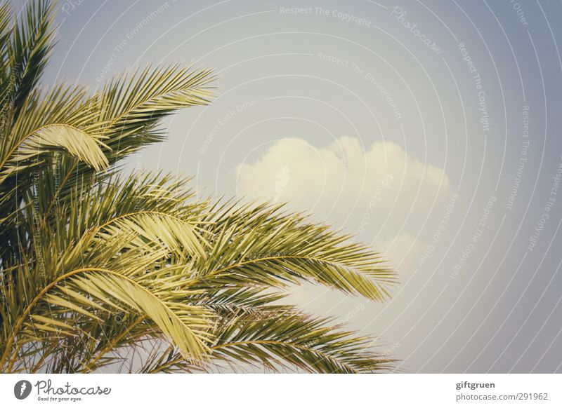 summer Plant Sky Clouds Summer Tree Leaf Bright Palm tree Part of the plant Warmth South Branch Twigs and branches Blue Green Colour photo Exterior shot