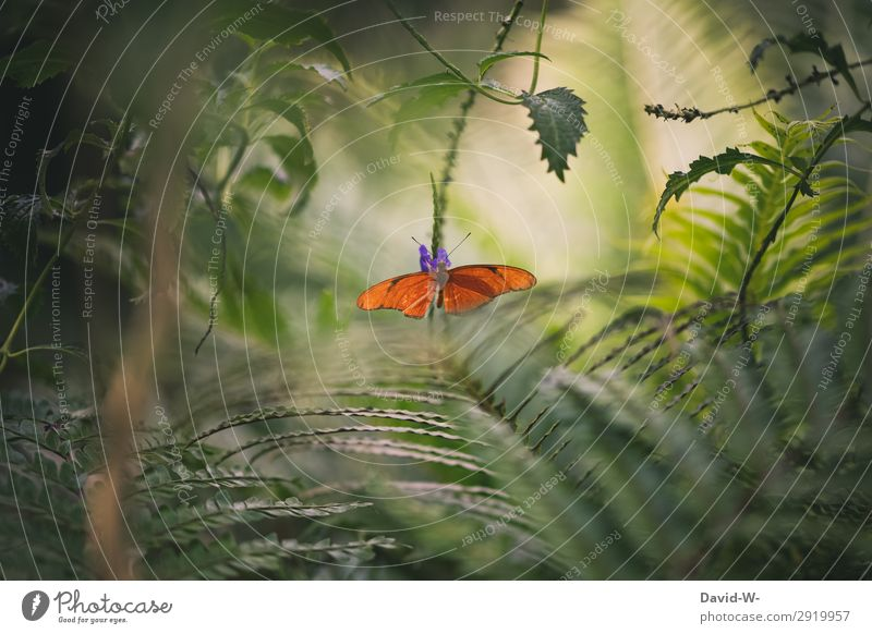 jungle feeling Art Work of art Painting and drawing (object) Environment Nature Landscape Plant Animal Sun Sunlight Spring Summer Climate Climate change Weather