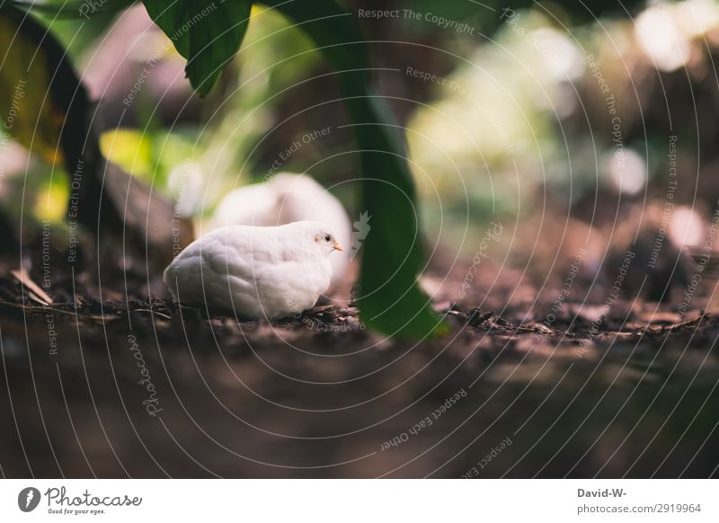 Well hidden Art Environment Nature Landscape Spring Summer Climate Beautiful weather Plant Foliage plant Animal 1 Observe Protection Camouflage Barn fowl Chick