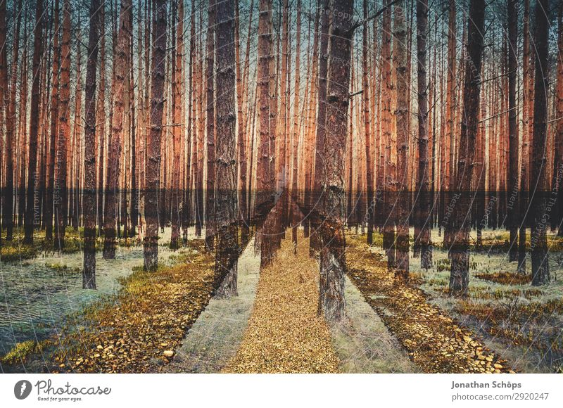 Multiple exposure forest and path Environment Nature Landscape Elements Meadow Forest Esthetic Anticipation Tree Coniferous forest Bleak Double exposure