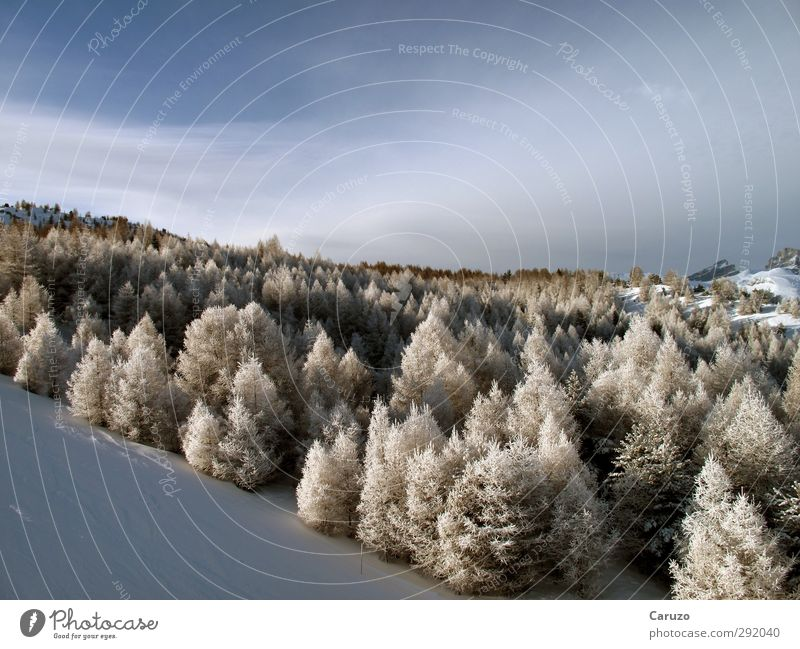 I'm Up In The Woods Environment Nature Landscape Air Sky Winter Weather Ice Frost Snow Plant Tree Forest Hill Alps Mountain La joue de loup superdevoluy France