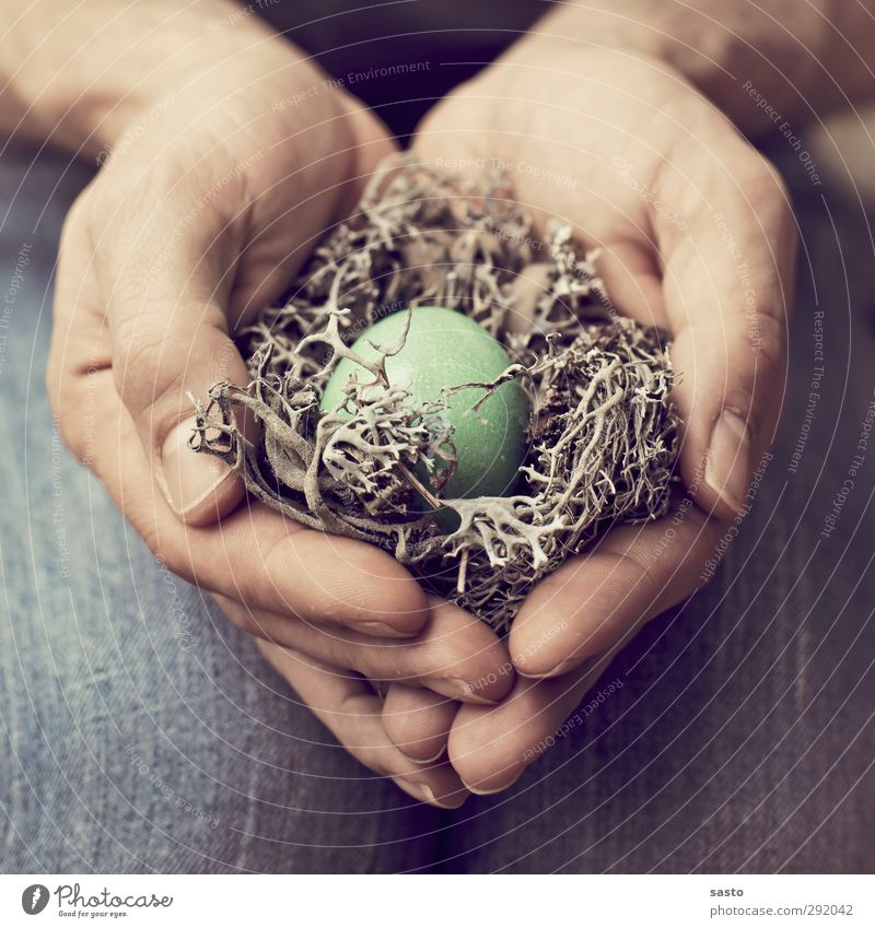 protection Egg Easter Masculine Man Adults Father Hand Fingers Blue Brown Green Warm-heartedness Responsibility Safety (feeling of) Nest Love and security Twig