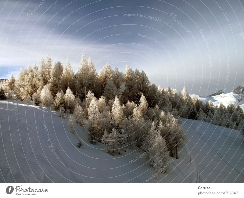 Wuz Winter Snow Mountain Environment Nature Landscape Air Sky Ice Frost Tree Forest Alps Observe Cold Blue Brown White Calm Loneliness Adventure Climate