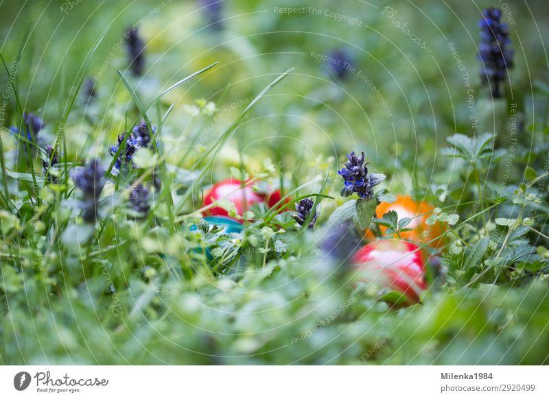 Nature Plant Joy Meadow Grass Garden Easter Hide Spring fever Easter egg Hen's egg