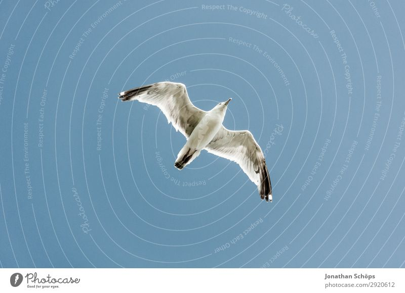 Seagull flies in the blue sky Vacation & Travel Tourism Summer Ocean Hiking Nature Landscape Sky only Rock Coast Animal Bird 1 White England Great Britain