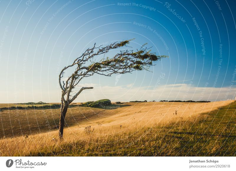 bald crooked tree on field in southern England Environment Nature Landscape Plant Elements Water Sky Climate Climate change Weather Beautiful weather Wind Field