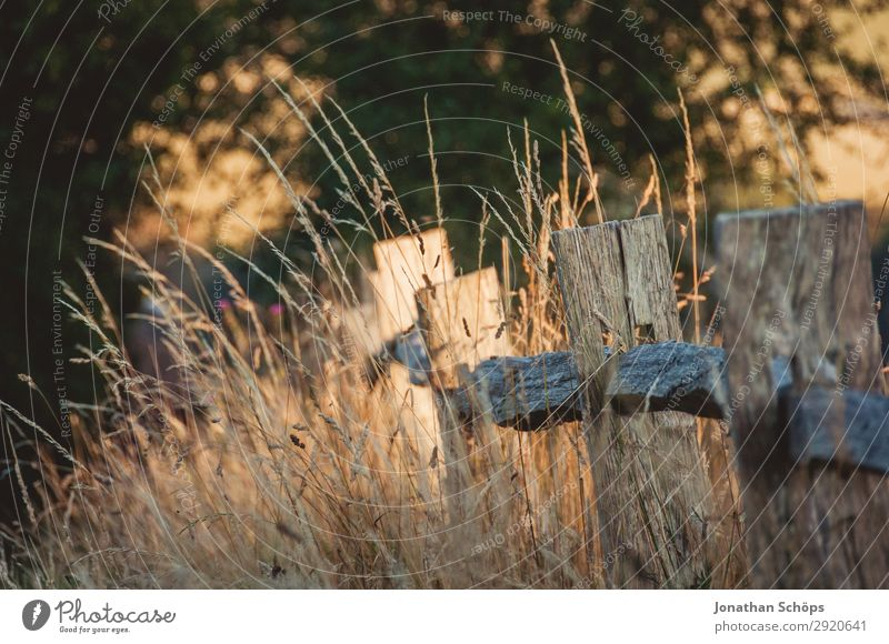 Fence at the edge of the field in the evening sun Environment Nature Landscape Plant Beautiful weather Meadow Field Brown Evening sun England Border