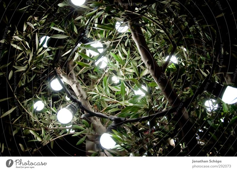 lamp tree Art Moody Tree Bushes Leaf Lamp Lighting Work of art Illuminate Electric bulb Lamplight Branch Twigs and branches Green White Round Circle