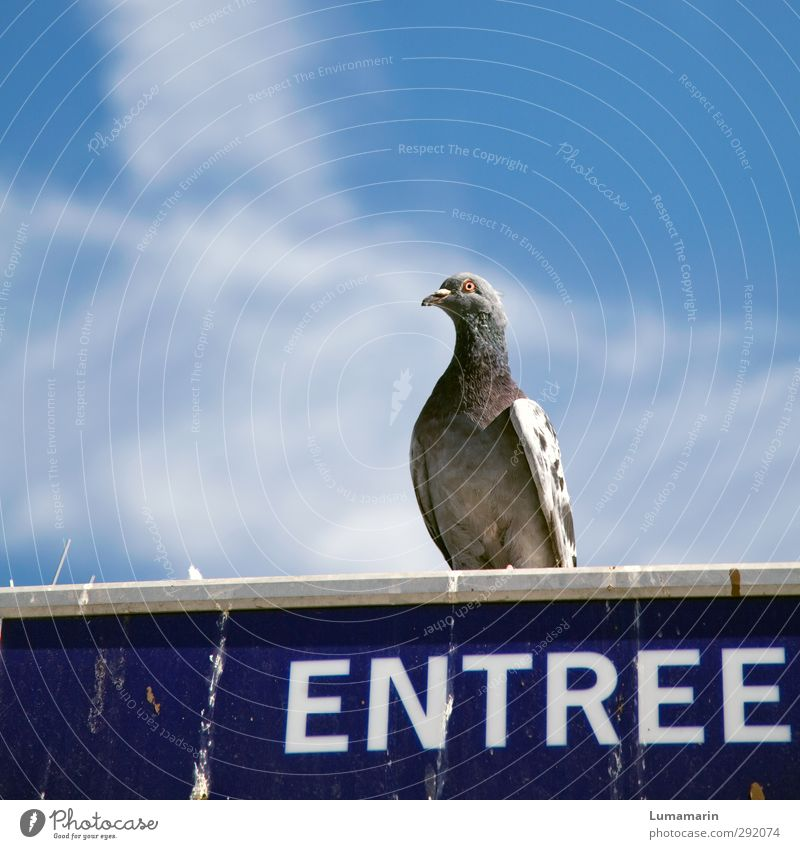 concierge Environment Sky Clouds Animal Wild animal Bird Pigeon 1 Sign Characters Signs and labeling Sit Dirty Above Town Entrance gatekeepers Watchfulness