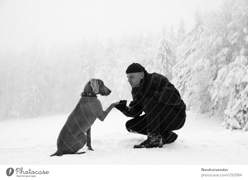 Man and Weimaraner hunting dog in the winter forest Lifestyle Winter Snow Winter vacation Team Human being Adults Friendship 1 45 - 60 years Climate Weather Fog