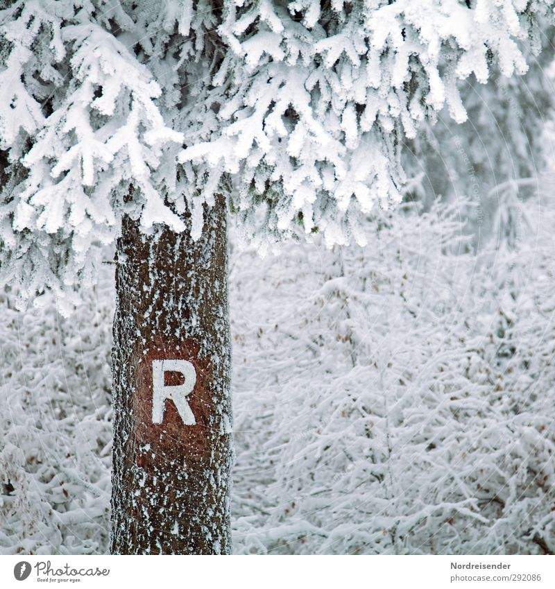 Last Sunday.... Calm Tourism Winter Winter vacation Nature Animal Climate Weather Ice Frost Snow Tree Bushes Forest Wood Sign Characters Signs and labeling
