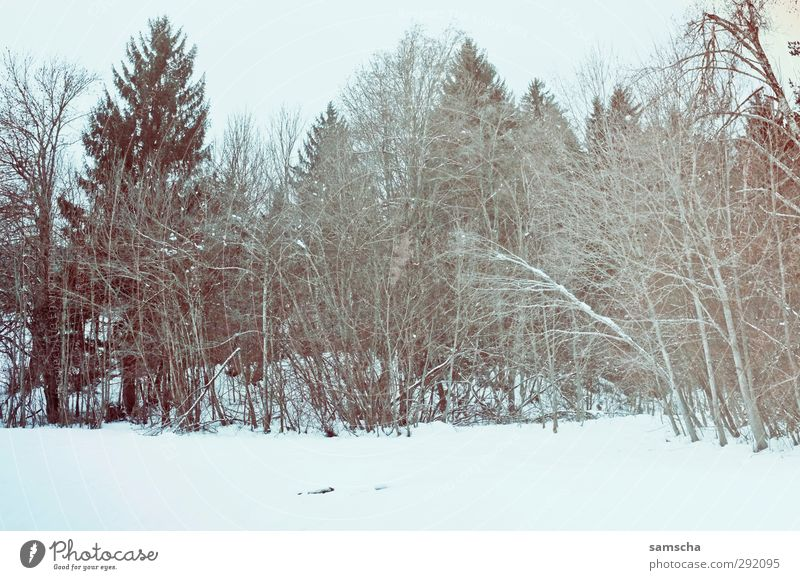 Nature Plant Tree Winter Landscape Forest Environment Dark Cold Snow Wood Natural Wild Agriculture Snowscape Forestry